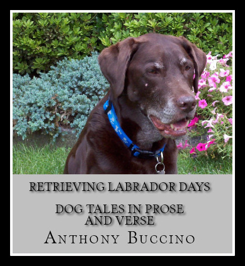 Retrieving Labrador Days by Anthony Buccino